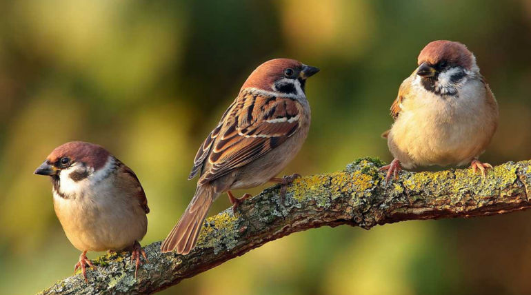 World Sparrow Day 2019